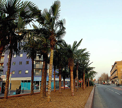 did-you-know-there-are-palm-trees-in-england1