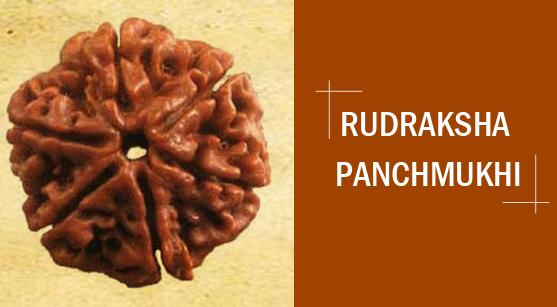 Astrological and Ayurvedic Significance Of Rudraksha