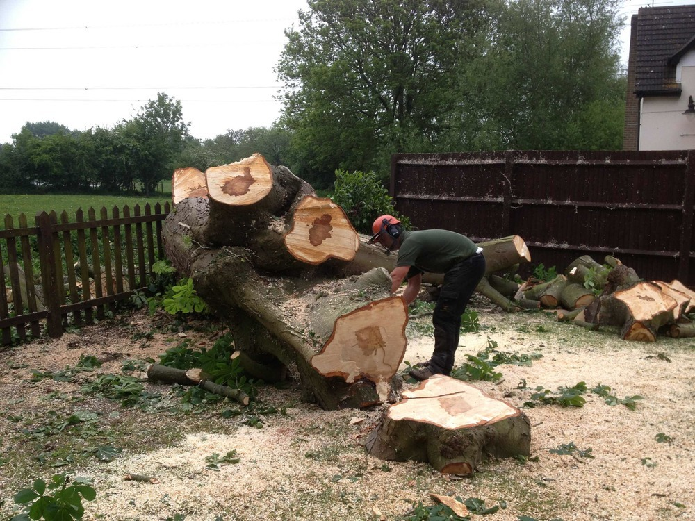 What Are The Duties Of The Tree Surgeons Slough