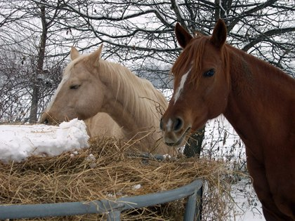 What Is Winter Colic?