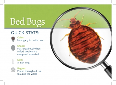Why Hire A Lawyer If You Get Bed Bug Bites