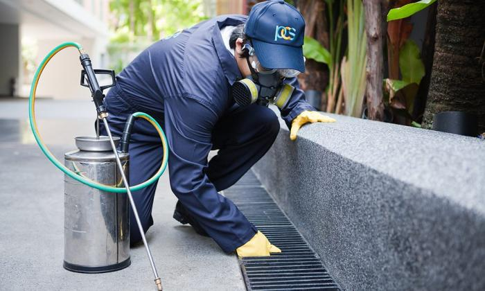 When To Hire A Pest Control Company