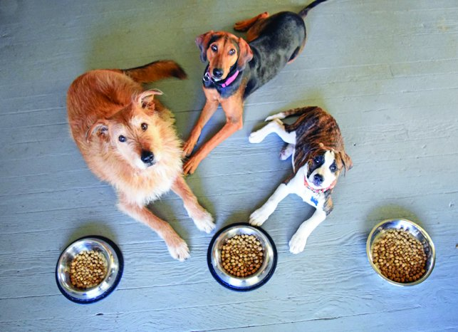 How To Feed Your Dog In Manner Way