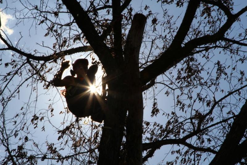 How Do The Tree Doctors Satisfy The Clients?