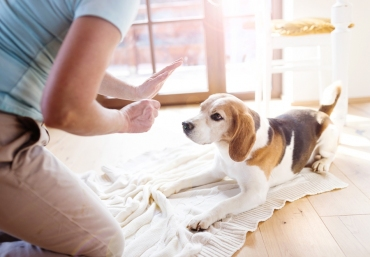 Understanding The Legal Implications Of Dog Bite Accident In Oregon