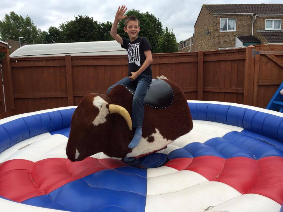 Rodeo Bull-Let The Fun Begin At Your Next Celebration