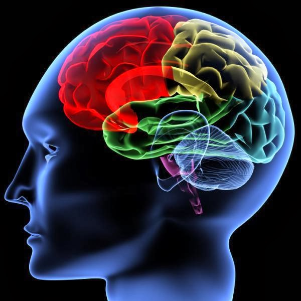 Everything You Need To Know About Neurological Disorders